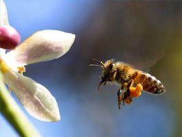 Allergiske Reaksjoner på bistikk