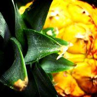 Plant Enzyme Behandling for Vorter