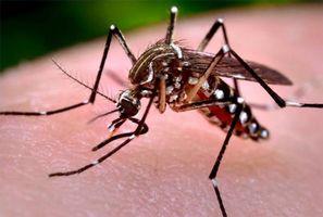 Om Dengue Fever og sykepleie Ledelse