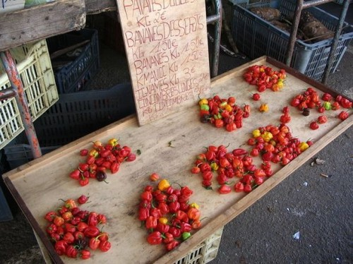 Cayenne Pepper Rensing