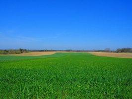 Fordøyelsesenzymer som finnes i hvete gress