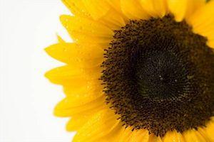 Nutrititional Informasjon på solsikkefrø