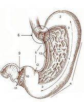 Informasjon om hvordan Kalsium laktat virker i kroppen