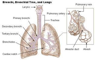 Sleep Apnea & interstitiell lungesykdom