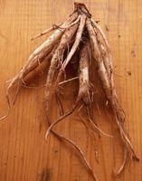 Bivirkninger av Burdock Root