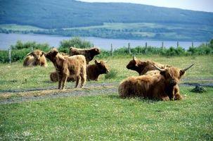 Hvordan kjøpe Grass-Fed Beef billig