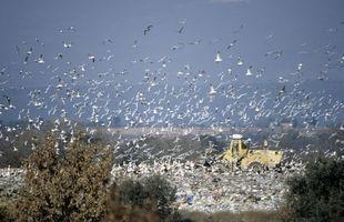 Hva Handlinger kan folk ta å stoppe Land forurensnings?