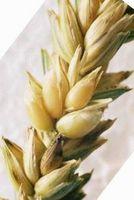 Hvordan lage en Wheat Hot Bag