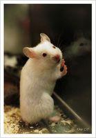 Animal avføring og sykdom hos mennesker