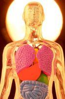 Hva Effects Does Ecstacy har på kroppen din?