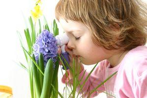 Helseforsikring programmer for barn i West Virginia