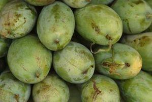 Hvordan å miste vekt Med Mango Extract