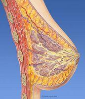 Hva Foods Hjelp en kvinne Gain brystvev?