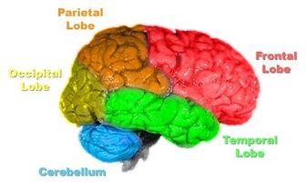 Typer mat som stimulerer hjernen