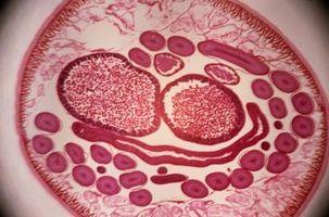 Naturlig måte å drepe parasitter