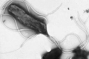 Helicobacter Pylori Informasjon