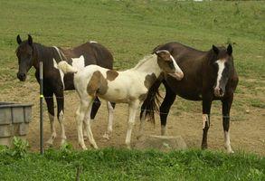 Equine Therapy & eldre