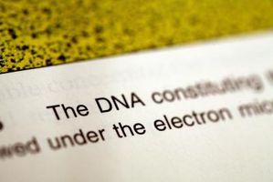 Hvordan er DNA-testing gjort for å bevise farskap?
