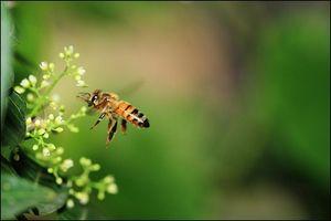 Forskjellen mellom økologisk og naturlig honning