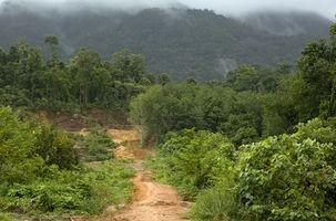 Medisin planter fra regnskogen i Amazonas
