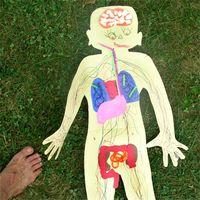Hvordan virker excretory systemet Arbeid med fordøyelsessystemet?
