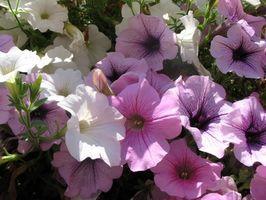 Bach Flower rettsmidler for lav selvfølelse