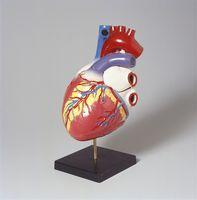 Hvordan styrke en Cardiovascular System