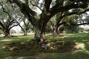 Beskrivelse, forebygging og behandling av smittsom Poison Oak
