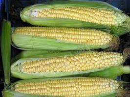 Tegn og symptomer på en Corn Allergi