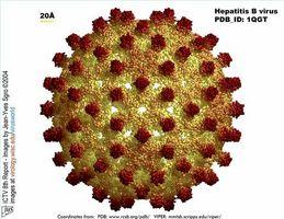 Forskjellen mellom Akutt og Kronisk hepatitt C