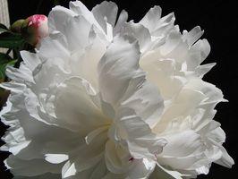 Naturlig Progesteron Cream & polycystisk ovariesyndrom