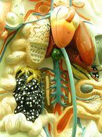 Hva er årsaken til høye nivåer av giftstoffer i leveren?