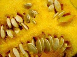 Pumpkin Seed Fordeler
