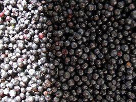 Blåbær ekstrakt bruksområder