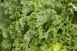 Fordeler med juicing Kale