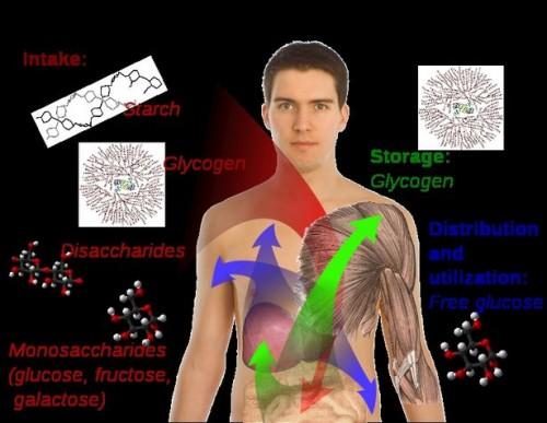 Glukose nivå Informasjon
