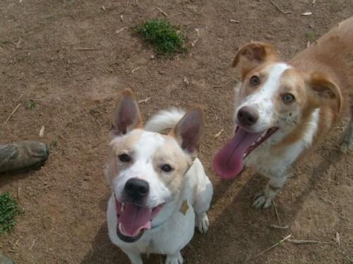 Smittsomme Dog hudinfeksjoner
