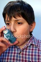 Gode kjæledyr for Astma Kids