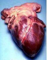 Hvordan behandle arteriosklerose
