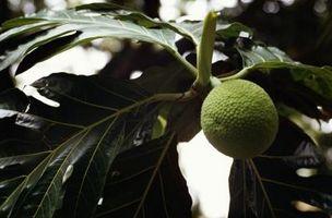Medisinplanter og dyr fra regnskogen