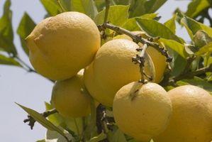 Lemon & Alkaline i Foods