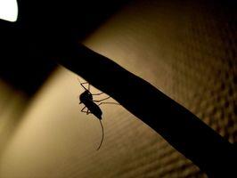 Øde svømmebassenger og mygg