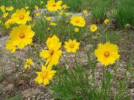 Hvordan bruke Natural Antihistaminer til å behandle pollenallergi