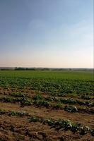 Organisk Vs.  Tradisjonell Landbruk