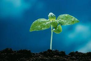 Bivirkninger av plantesteroler