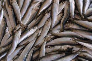 Er fiskeolje høy i Purines?