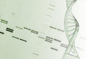 Hva er Kromosom 15?