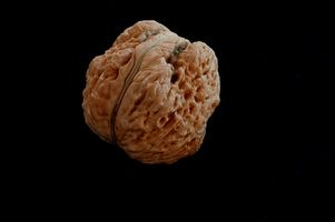 Black walnut oil for parasites