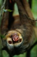 Hvorfor er Tropical Rain Forest Animals viktig for folk?