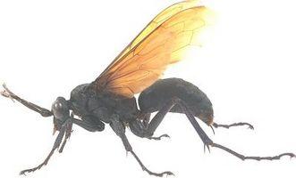 Er det normalt for en Wasp Sting å klø Etterpå?